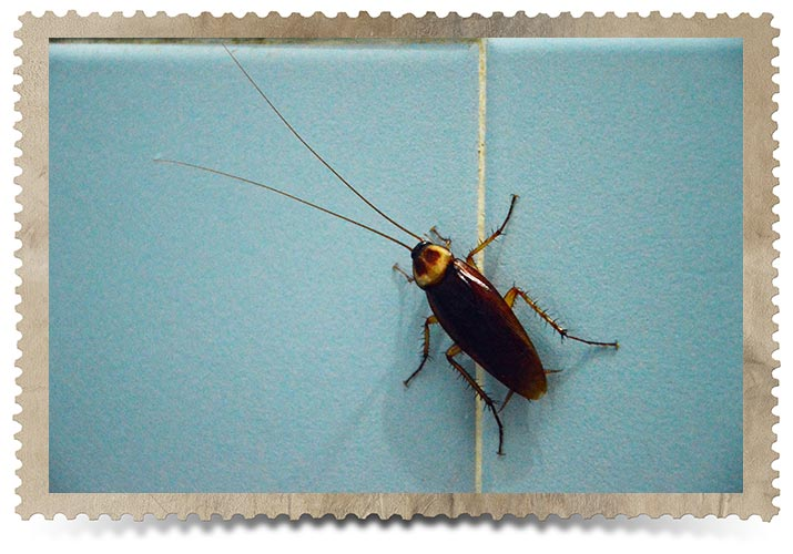 Toronto Cockroach Control