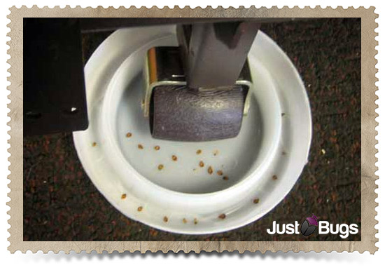 Just Bugs - Bed Bug Detection