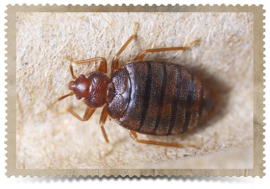 Prevent Bed Bugs From Entering Your Home