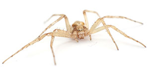 Toronto Spider and Other Insect Control