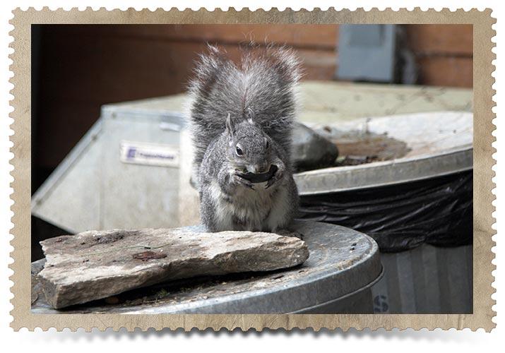 Toronto Squirrel Control