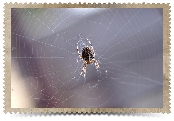 Toronto House Spider Control