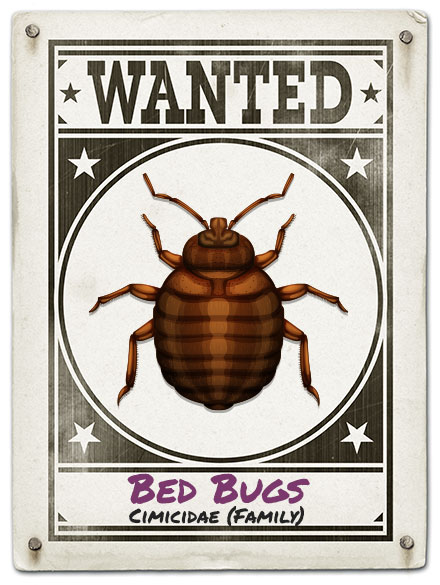 Just Bugs Kills All Bed Bugs, 100% Satisfaction Guaranteed!