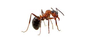 Toronto Ant Control