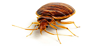 Toronto Bed Bug Removal