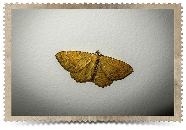 Toronto Moth Control