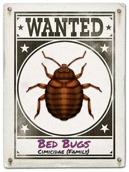 Just Bugs Kills All Bed Bugs, 100% Satisfaction Guaranteed!